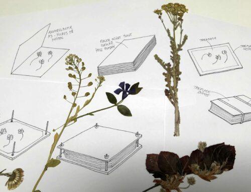 5 måder du kan presse blomster på.