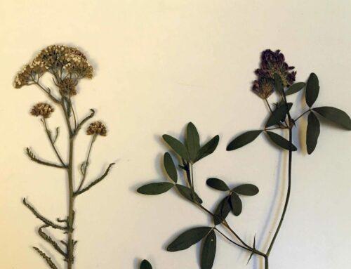 20 Ideer til at bruge dine pressede blomster